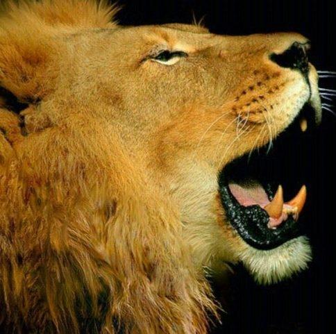 cropped-Lion-Roar.jpg
